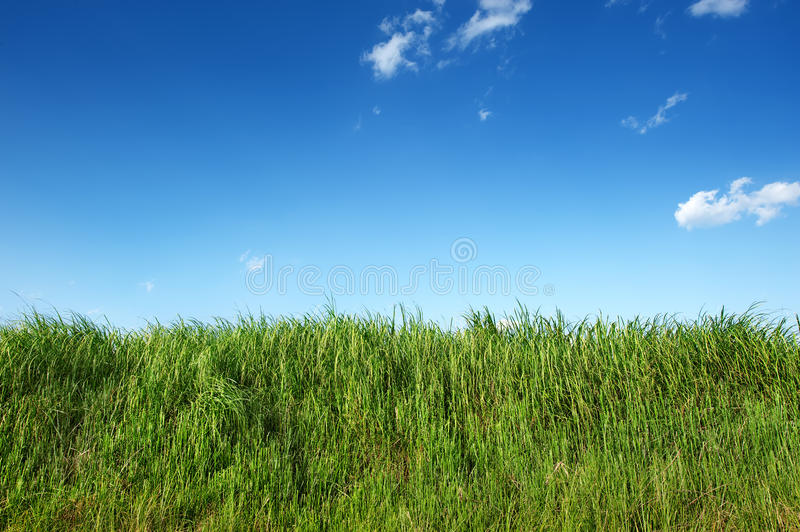 Download Green Grass In Clear Blue Sky Stock Photo - Image of plant, rural: 19298418