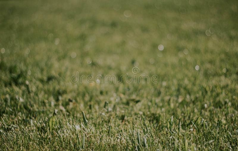 Green grass close-up. Beautiful lawn. The texture of green grass on the field. Background with grass.  stock images