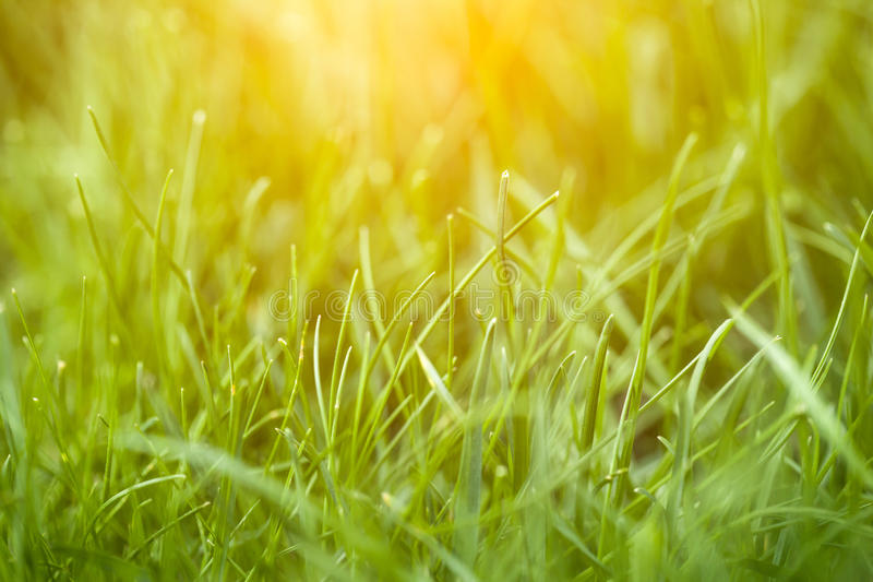 Green grass. Close up image royalty free stock images