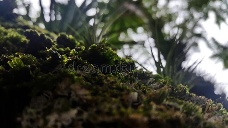 Green Grass Close Up Photo stock images