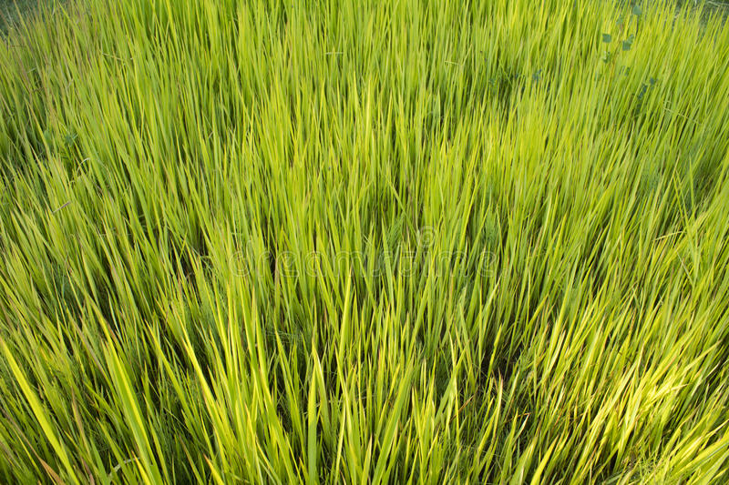 Green grass close-up stock images