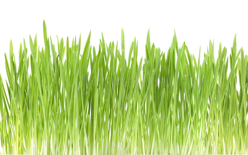Download Green Grass Close Up, On White Background Stock Image - Image of natural, lawn: 13041381