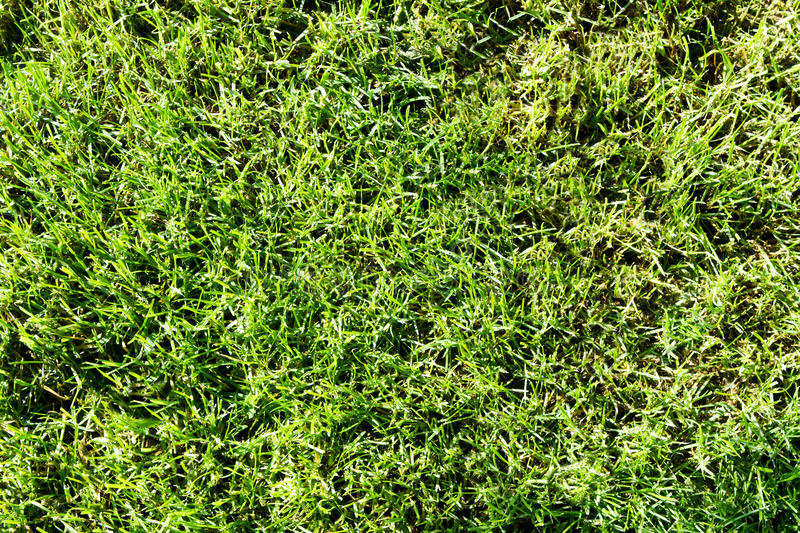 Download Green grass stock image. Image of meadow, outdoors, plant - 31450159