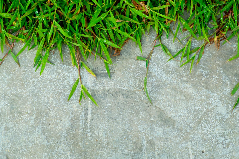 Green grass on concrete wall close up for background and backdrop use. Closeup of green grass on concrete wall close up for background and backdrop use stock image