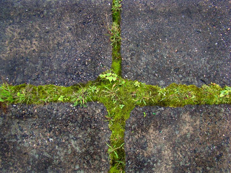The green grass covers the gray paving slab. stock image