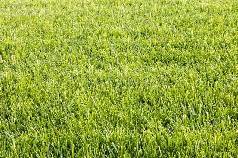 Green grass cut texture lawn landscape yard nature natural background royalty free stock photos