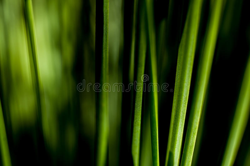 Green Grass Dark stock image