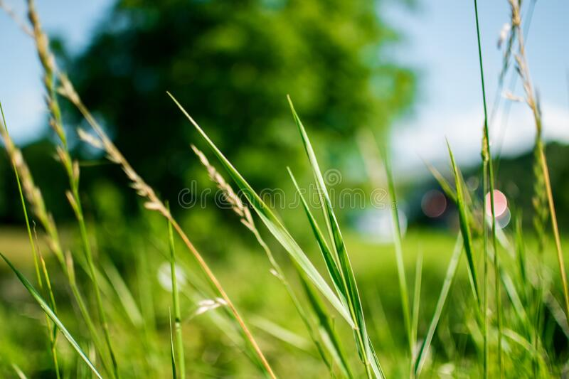 Green Grass During Daytime In Focus Photography Free Public Domain Cc0 Image