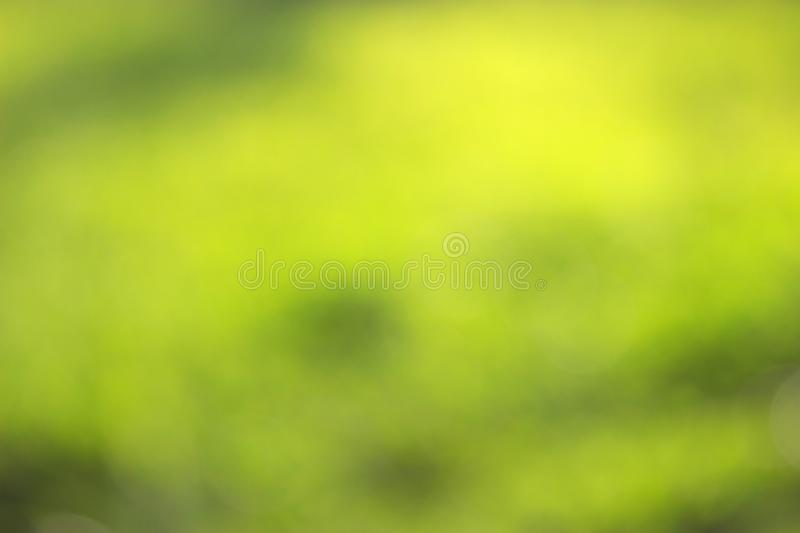 Grass defocused background. Green grass defocused background. beautiful summer day stock images