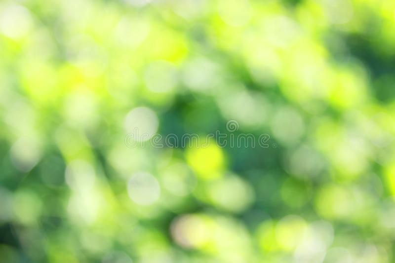 Grass defocused background. Green grass defocused background. beautiful summer day royalty free stock image