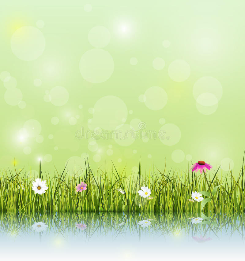 Green grass and echinacea ( purple coneflower) flower, white daisy and wildflower with reflection on water. Vector illustration Green grass and echinacea ( stock illustration