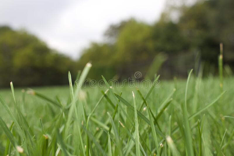 Green Grass Field Free Public Domain Cc0 Image
