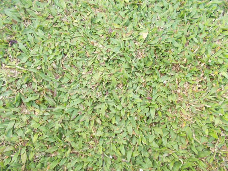 Green grass field background, pattern and texture stock photography