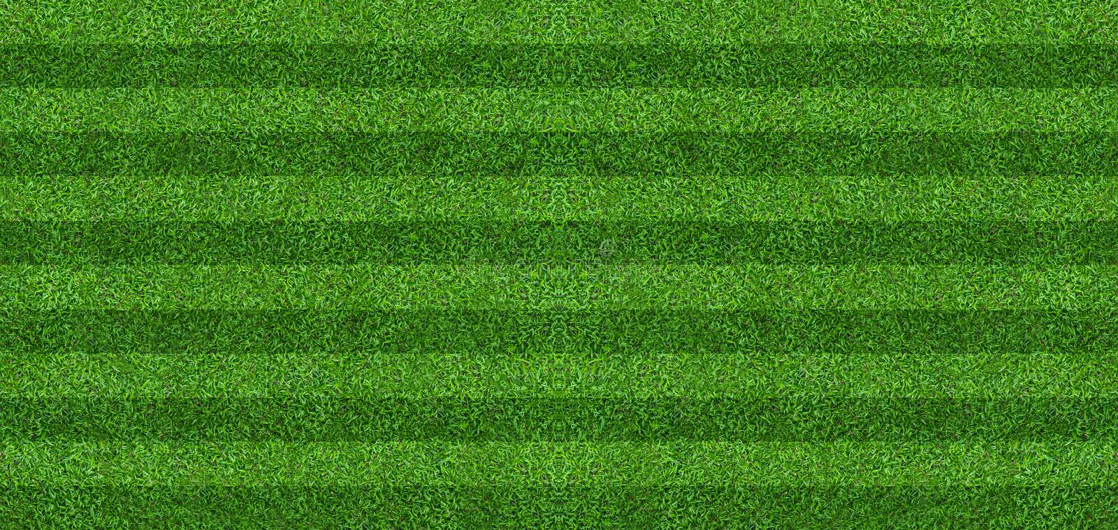Green grass field background for soccer and football sports. Green lawn pattern and texture background. Close-up royalty free stock photo