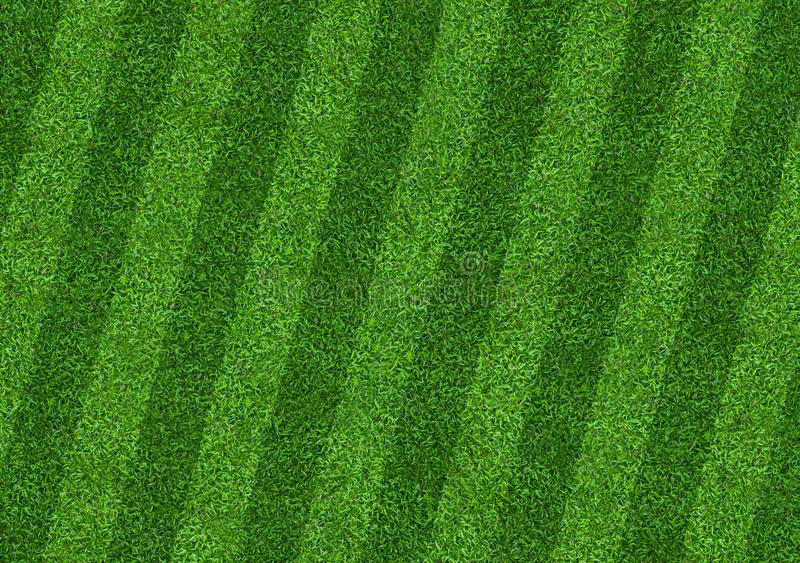 Green grass field background for soccer and football sports. Green lawn pattern and texture background. Close-up. Image royalty free stock photo