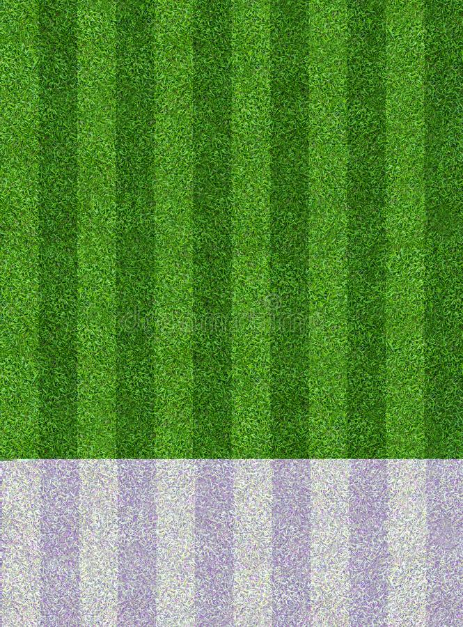 Green grass field background for soccer and football sports. Green lawn pattern and texture background. Close-up. Image royalty free stock image