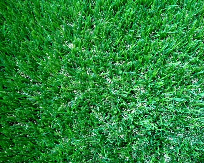 Green grass field background, texture, pattern. Food, court. royalty free stock photo