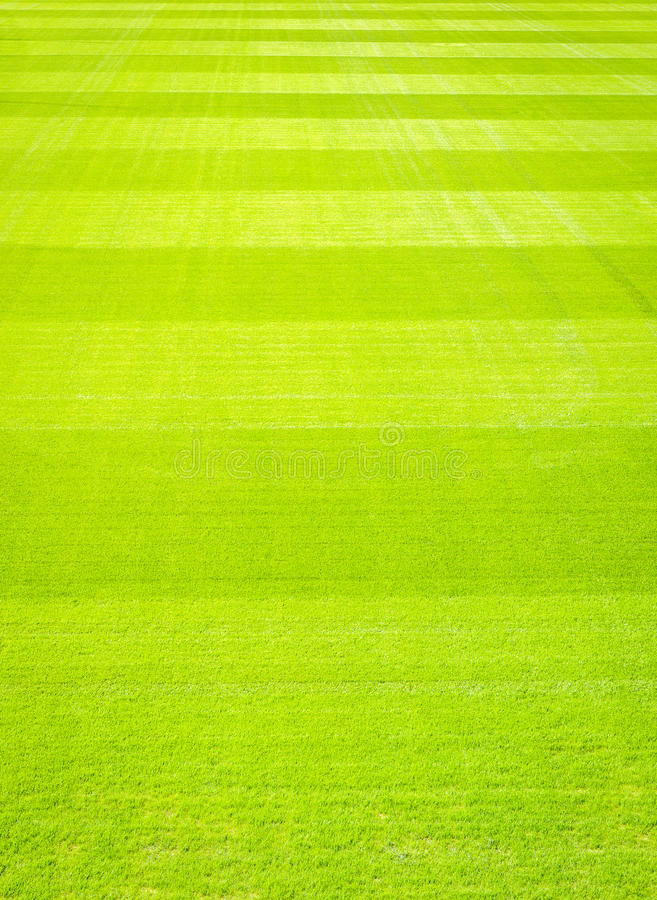 Green grass field background, texture, pattern. Green grass background, texture, pattern. Perfect as football, baseball field etc, Very high resolution. Photo royalty free stock photos