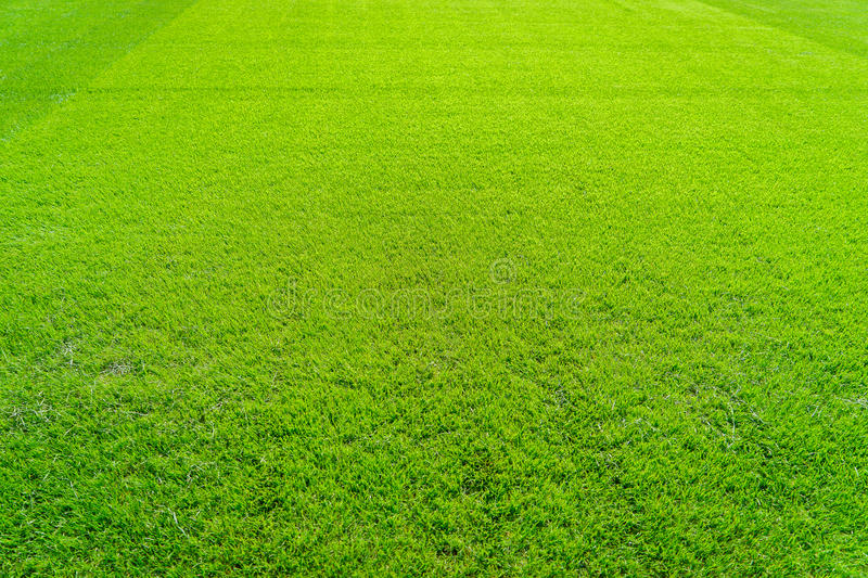 Green grass field background, texture, pattern stock images