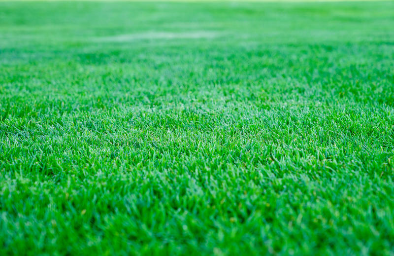 grass field background. Download Green Grass Field Background, Texture, Pattern Stock Image - Of Baseball, Background