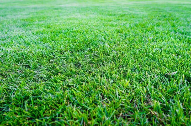 Green grass field background, texture, pattern stock image