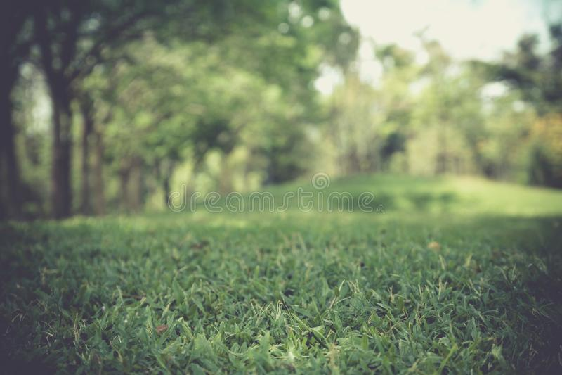 Green grass field in big city park and green fresh tree plant. royalty free stock photo