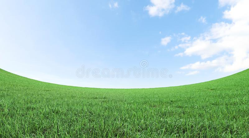 Green grass field and blue sky 3D rendering royalty free stock photos