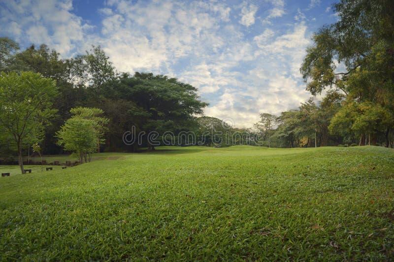 Green grass field in city park, evening stock photos