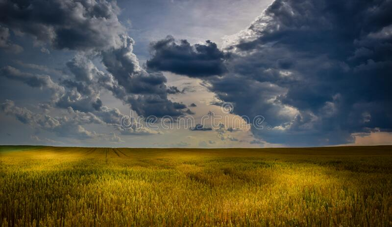 Green Grass Field during Daytime royalty free stock images