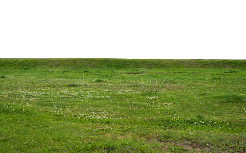 Green grass field isolated on white background stock photography