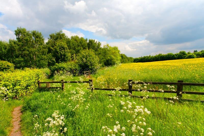 Green grass field landscape stock images