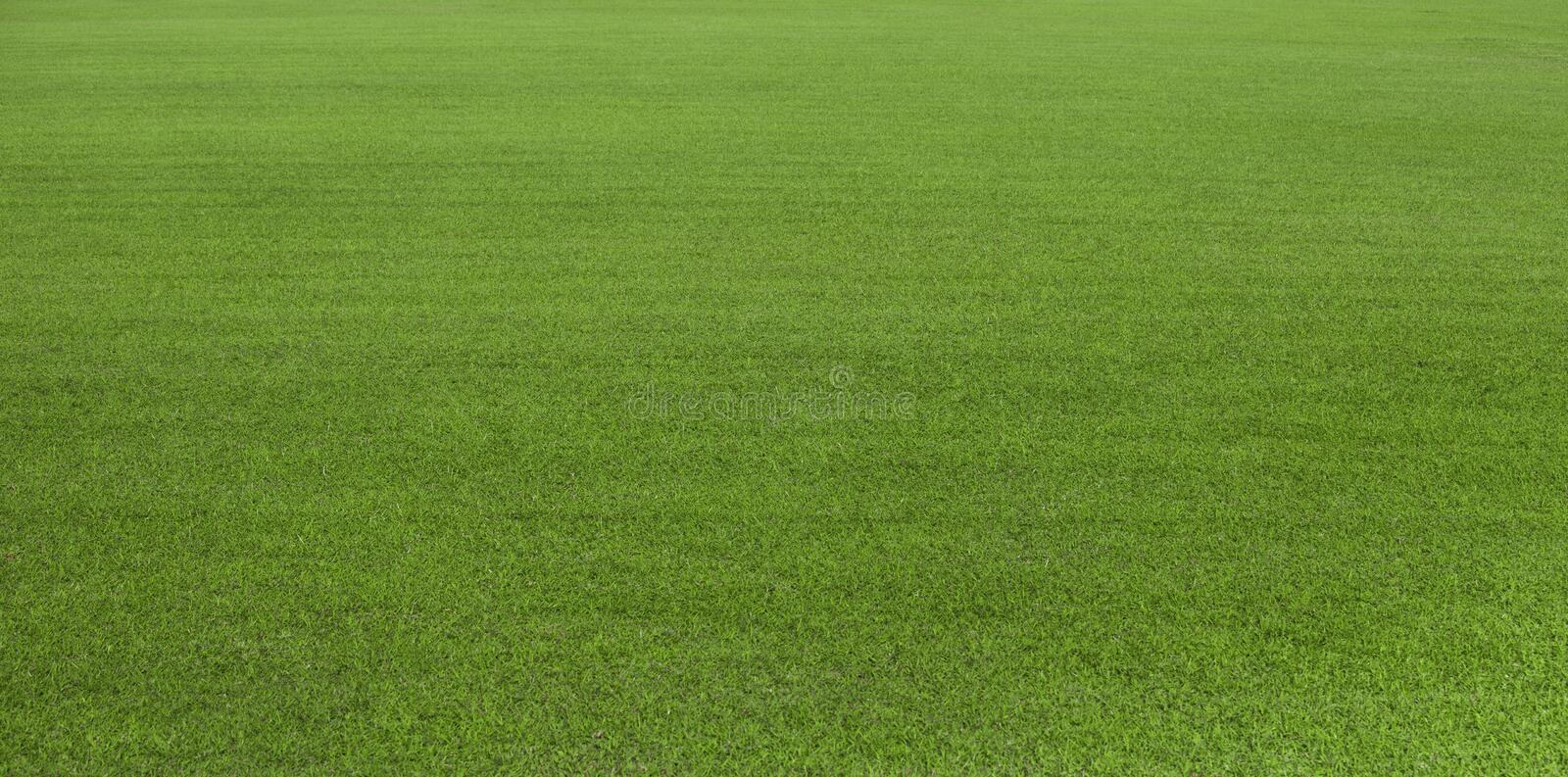 Green grass field, green lawn. Green grass for golf course, soccer, football, sport. Green turf grass texture and background for d stock image