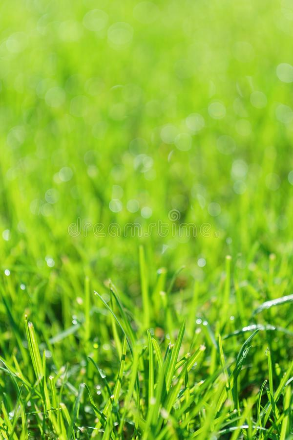 Green grass field or lawn. Summer background with copy space stock photography