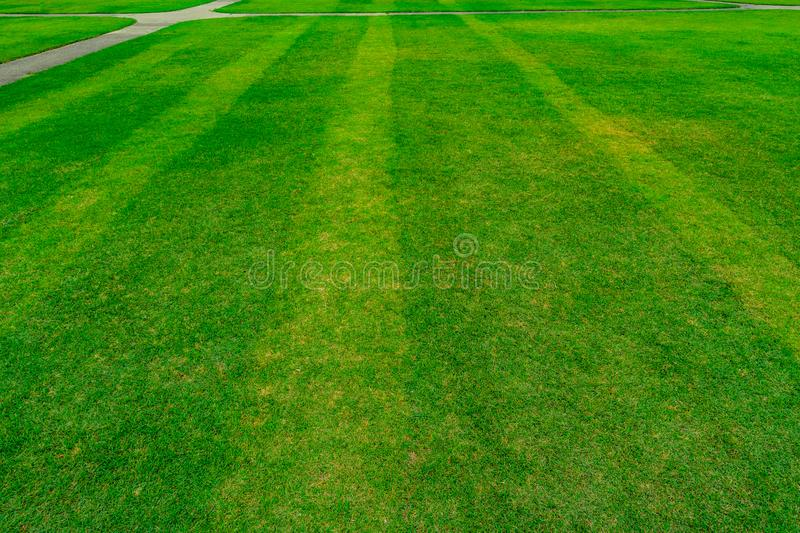 Green grass field with line pattern texture background royalty free stock photo