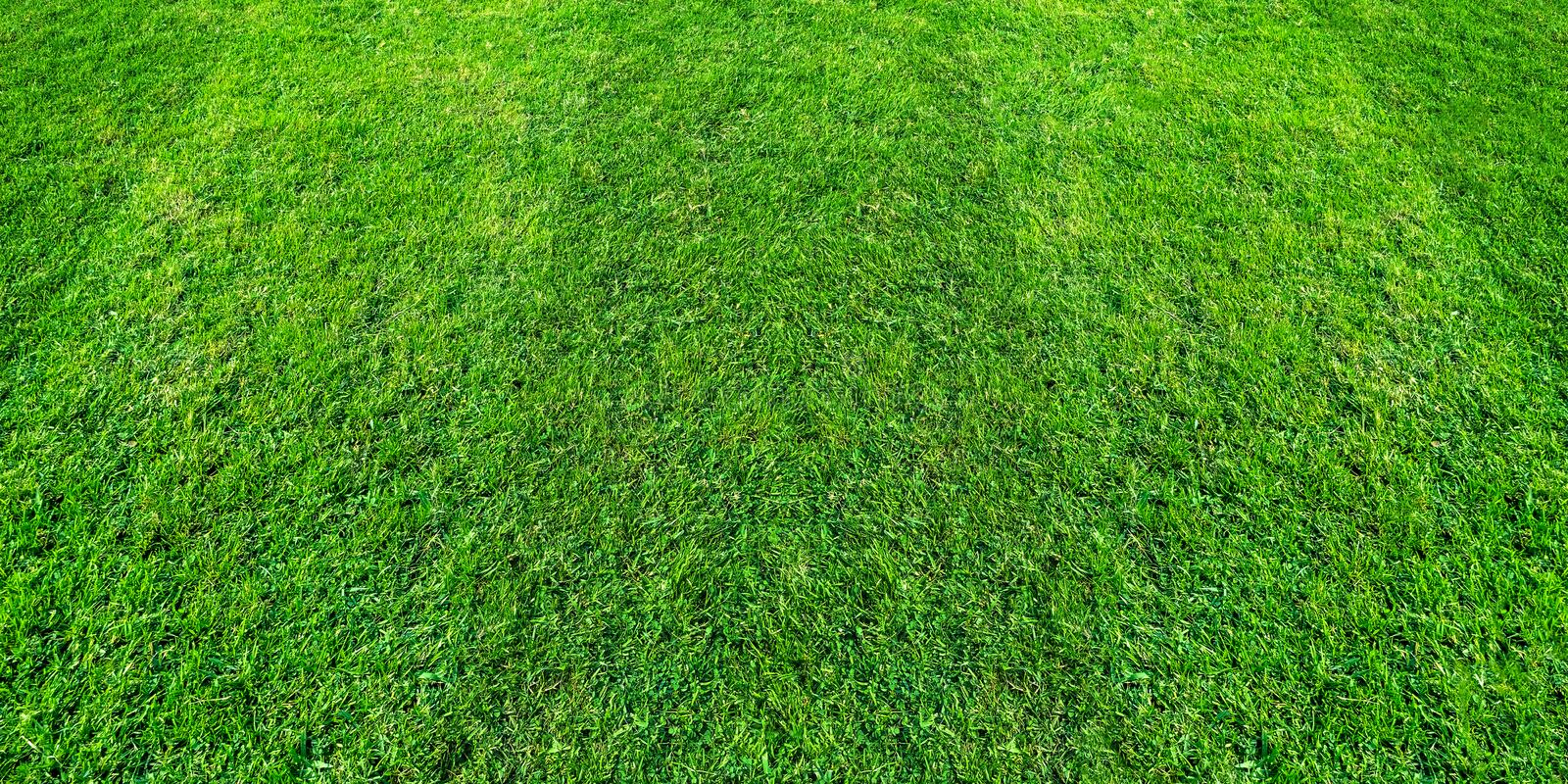 Green grass field pattern background for soccer and football sports. Green lawn pattern texture background. Green grass field pattern background for soccer and stock images