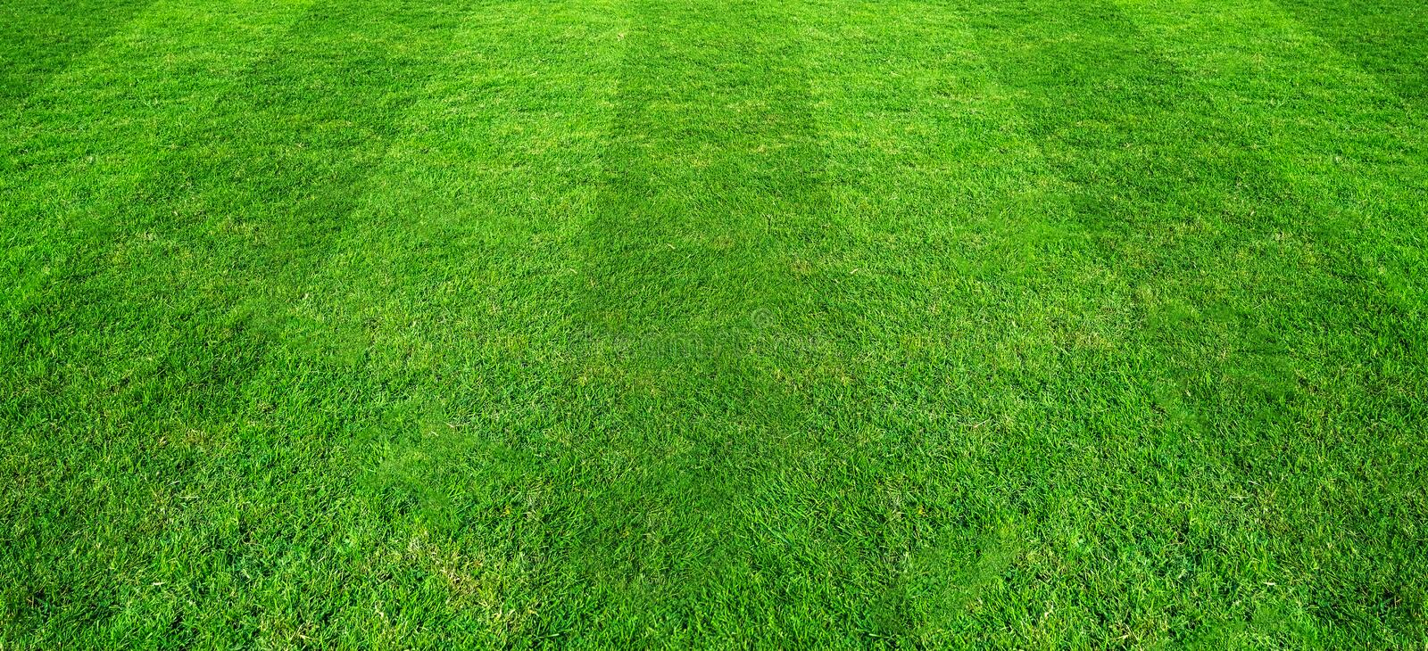 Green grass field pattern background for soccer and football sports. Green lawn pattern and texture for background. Green grass field pattern background for royalty free stock photo