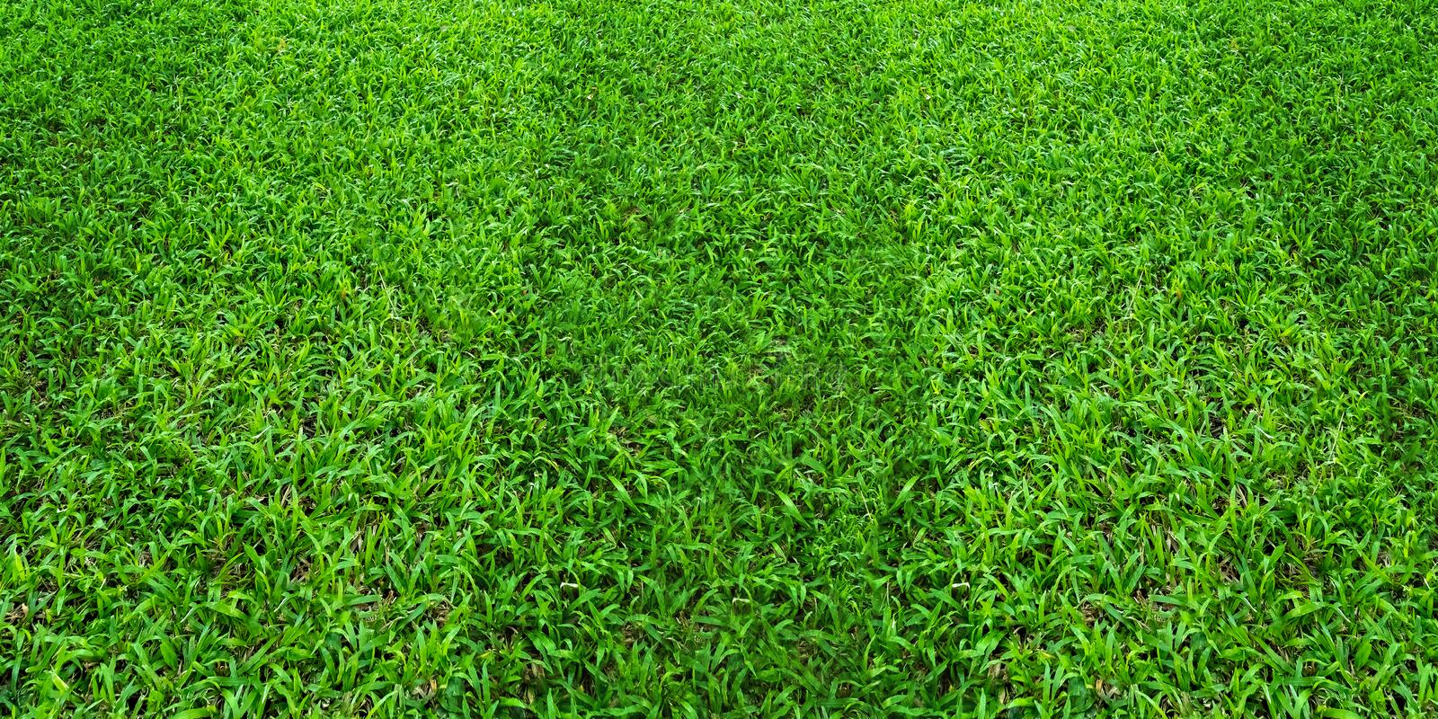 Green grass field pattern background for soccer and football sports. Green lawn texture background. Green grass field pattern background for soccer and football royalty free stock photo