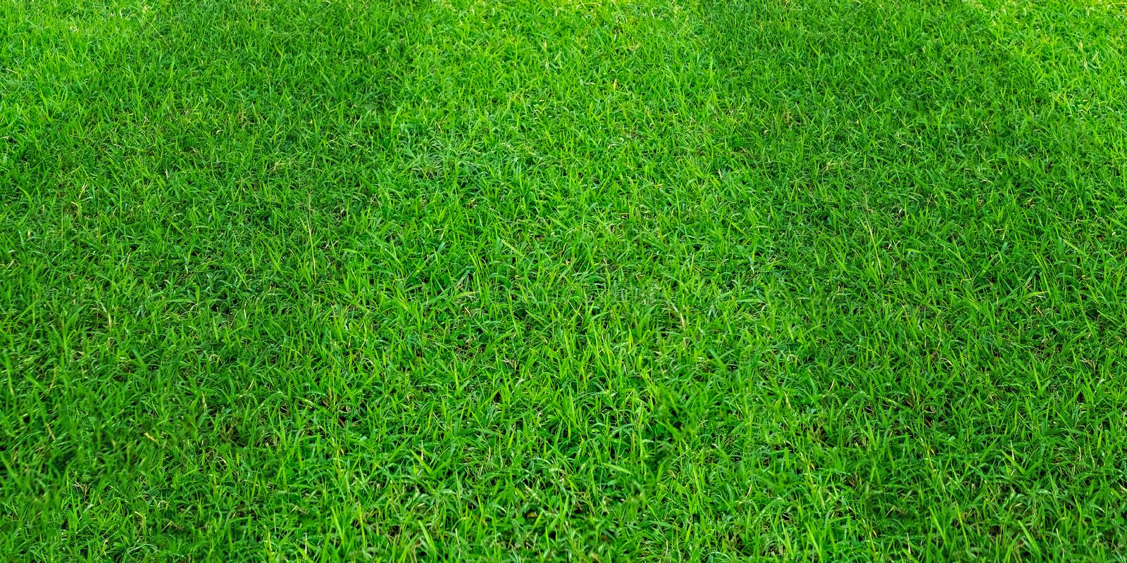 Green grass field pattern background for soccer and football sports. Green lawn texture background. Green grass field pattern background for soccer and football royalty free stock photos