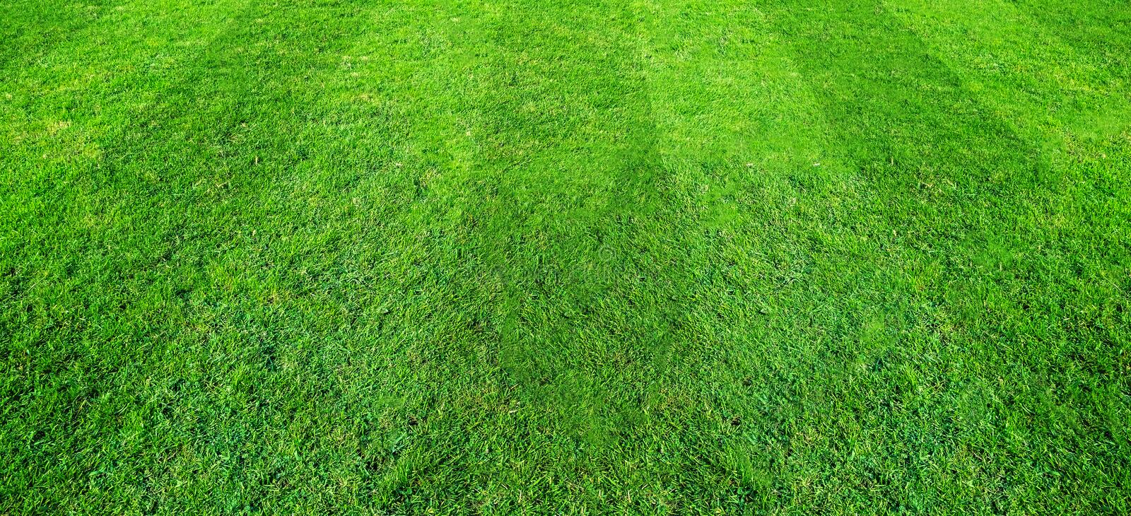 Green grass field pattern background for soccer and football sports. Green lawn texture background. Green grass field pattern background for soccer and football stock photography