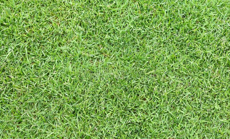 Green grass field seamless background texture.  royalty free stock images