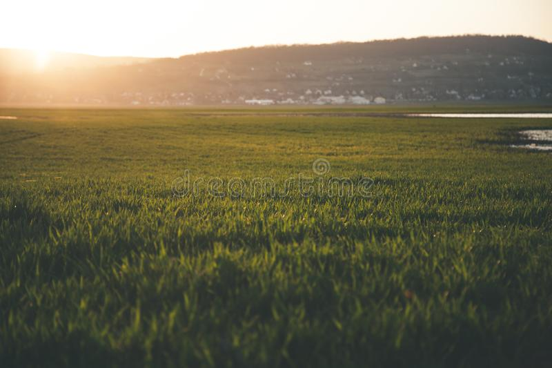 Green Grass Field during Sun Rise royalty free stock photography