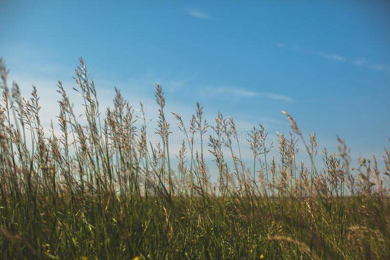 Green grass in the field on a Sunny summer day or morning, against a blue sky with clouds stock images
