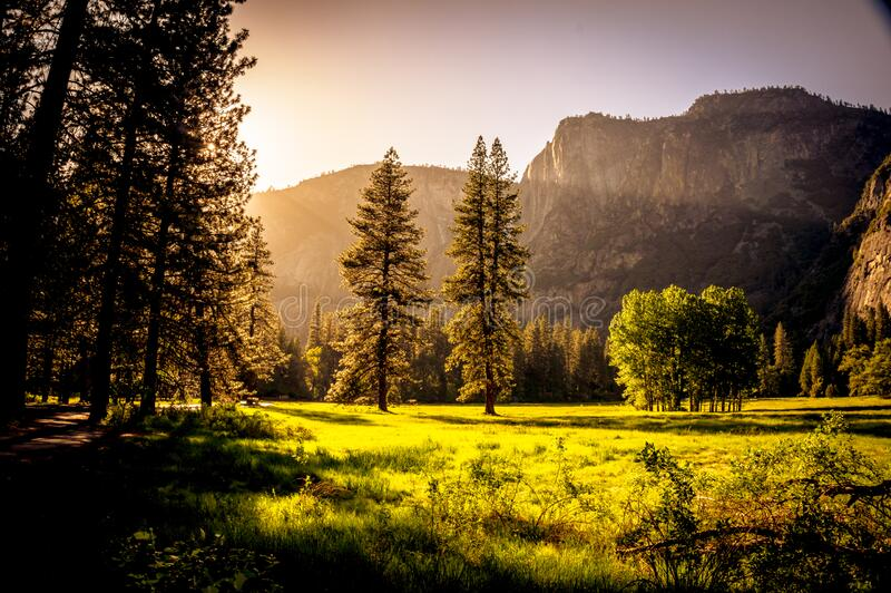 Green Grass Field and Green Tress during Day Time stock images