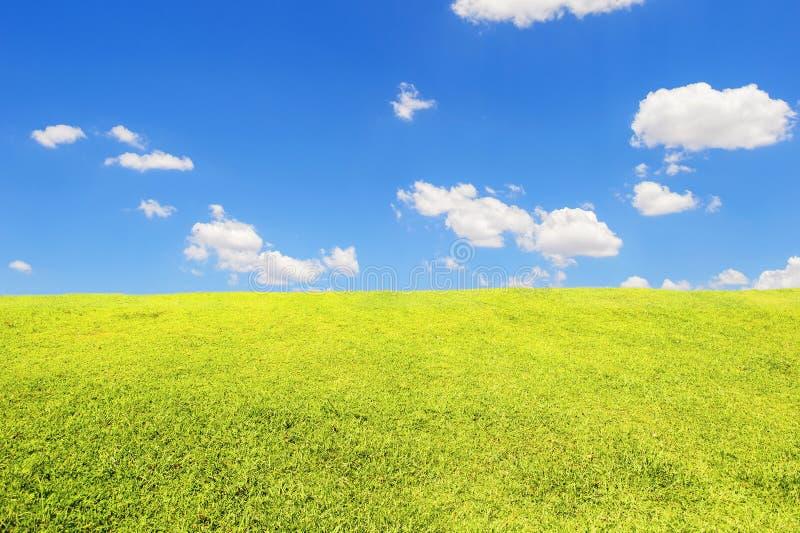 Green grass field under blue sky. The green grass field under blue sky stock photography