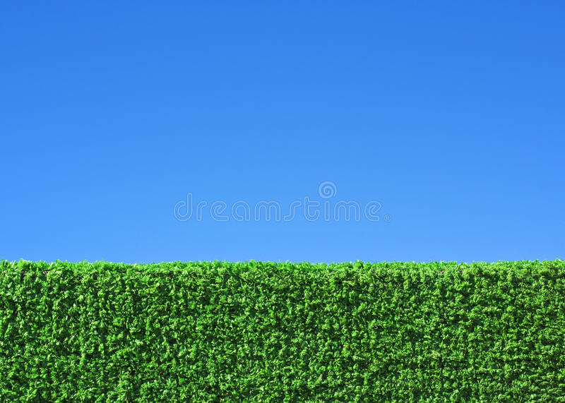 Green grass field under blue sky. Background royalty free stock photo