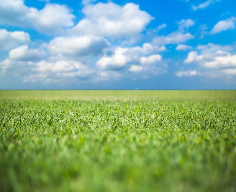 Green grass field under blue sky. Beauty nature background stock photography