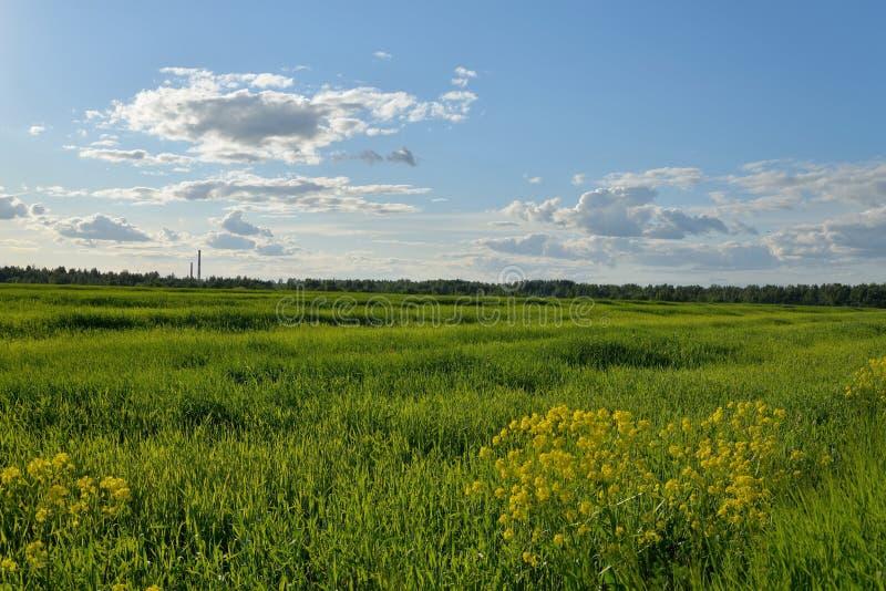 Green grass field under blue sky Sunny day.  royalty free stock photos