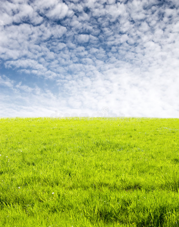 Green Grass And Fleecy Clouds Stock Photo