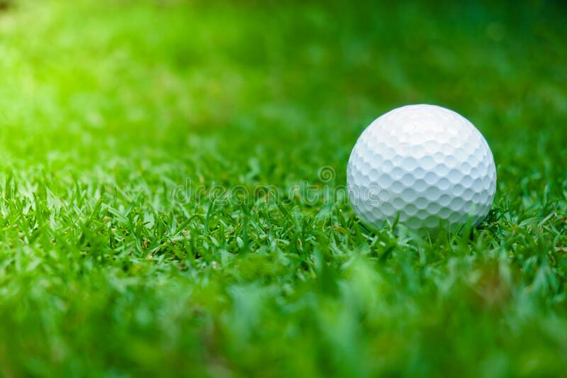 Green grass with golf ball close-up in soft focus at sunlight. Sport playground for golf club concept ,Golf ball on tee ready to stock images
