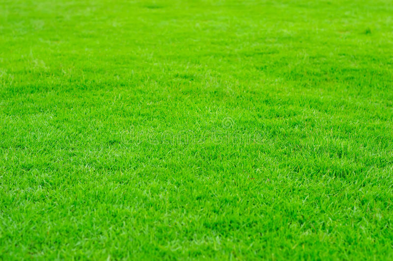 Green Grass in golf filed royalty free stock photos